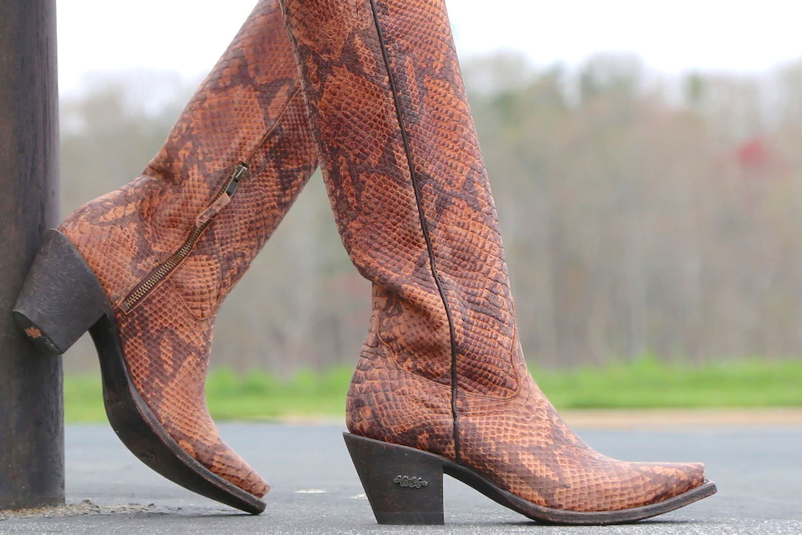 miss macie snakeskin tall western cowgirl brown boots