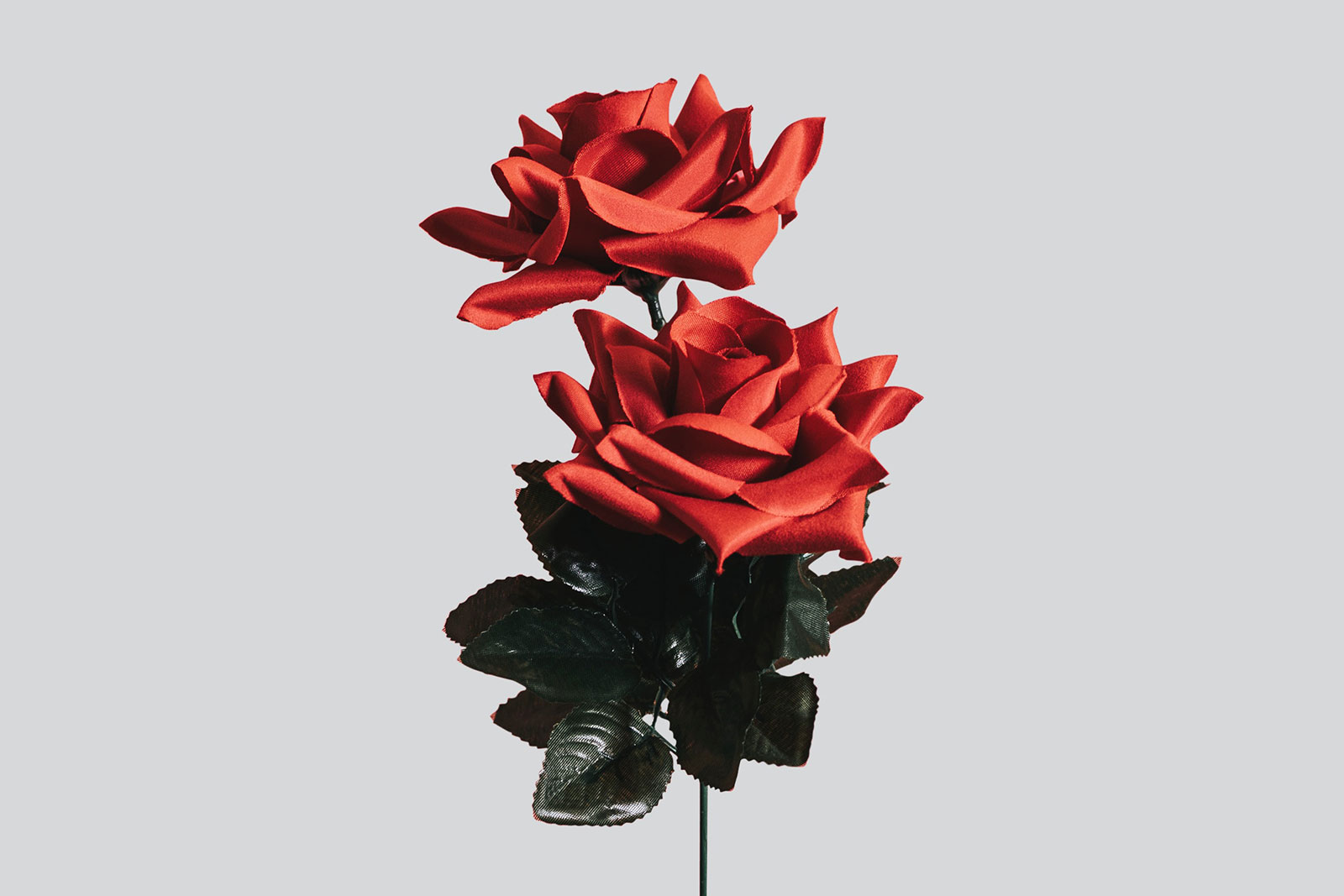 red rose valentines day ideas for girlfriend